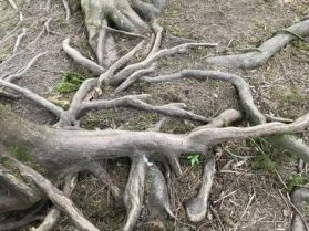 Roots for you to sit. The trees listen.