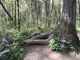 Tree Roots Offer Meditation Seatings